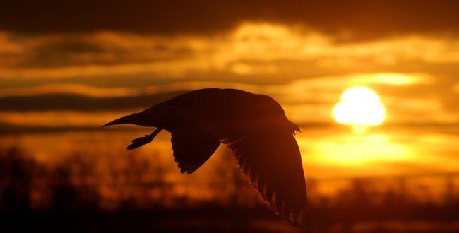 """""""Águila o pato,  y cómo cambiar la perspectiva de tu negocio"""